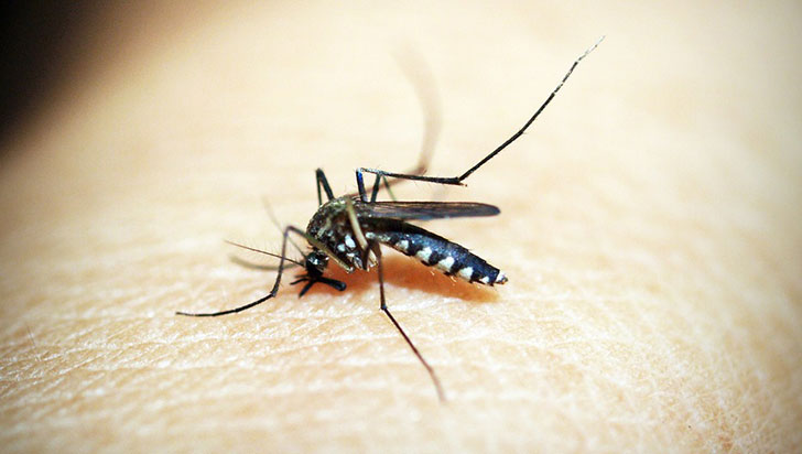 Vacuna contra el dengue tiene 90% de eficacia en los quindianos, afirma experto