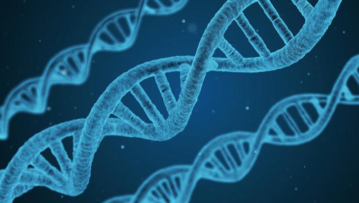 Identifican gen clave en respuesta inmunológica a infecciones y enfermedades