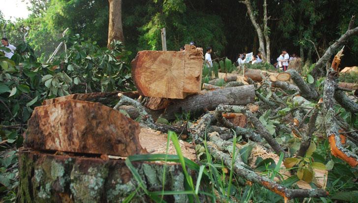 Tasa de deforestación en el Quindío es de 0,4%