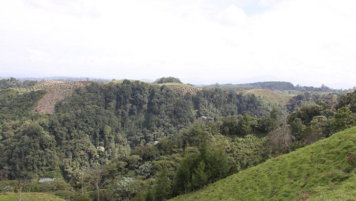 En el Quindío BanCO2 protege 235 hectáreas de los bosques