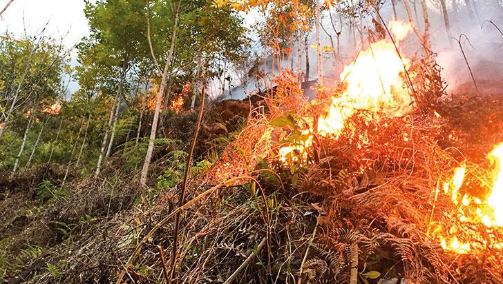 Fuerte incendio forestal se registró en parte alta de zona rural de Calarcá
