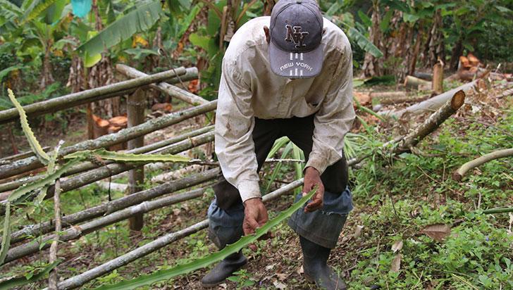 Agroquímicos vs. agricultura orgánica: vida, salud y economía