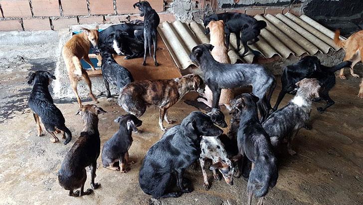 24 mascotas que viven en una casa, en riesgo de abandono o de eutanasia