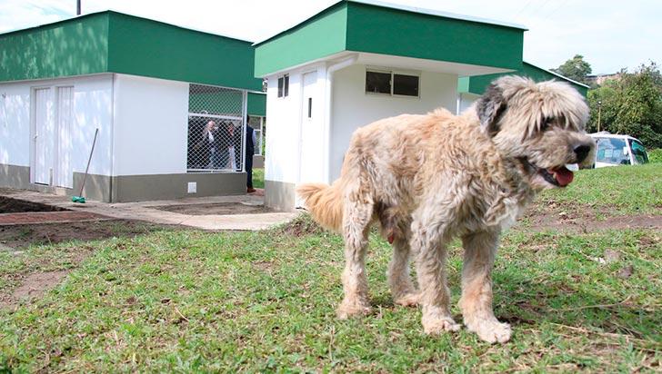 Mascotas habrían sido abandonadas cerca de Zoonosis en presencia del vigilante