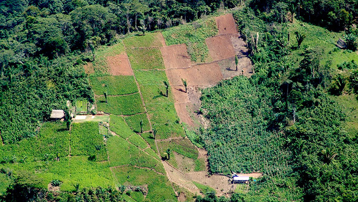 Farc radica proyecto para trato especial a quienes tienen cultivos ilícitos