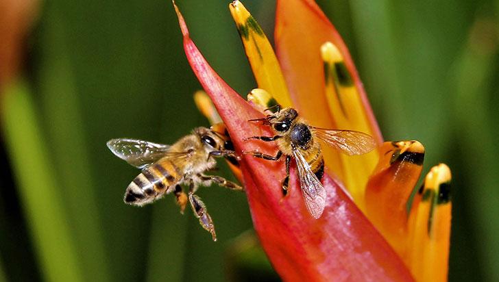Investigan en la muerte de más de siete millones de abejas en Colombia