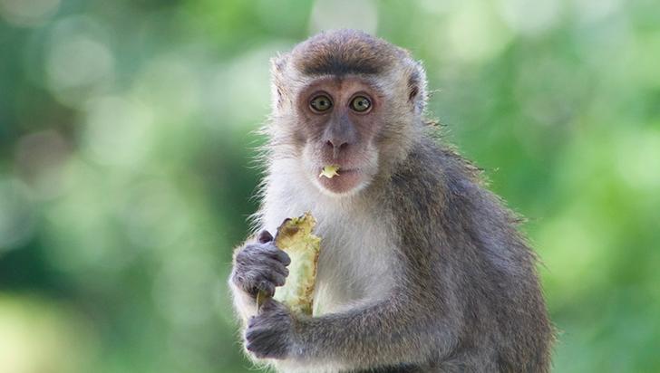El auge del descubrimiento de nuevas especies no es buena noticia para la biodiversidad