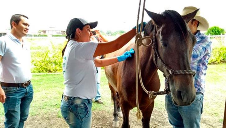 Autorizan movilización y realización de eventos de equinos en Quindío