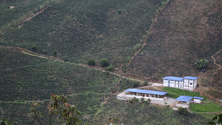 Con lonas, producción de café aumentaría 41%