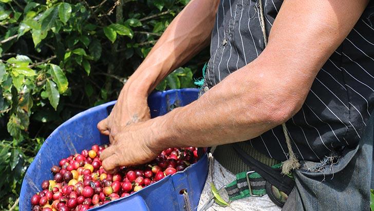 """""""Al incentivar consumo interno de café, las cosechas serían sostenibles al productor"""": Fáber Buitrago"""