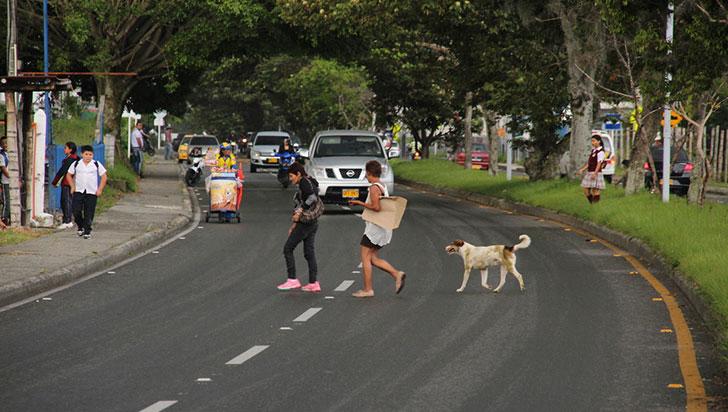 Crecen las denuncias por falta de señalización en la avenida Centenario