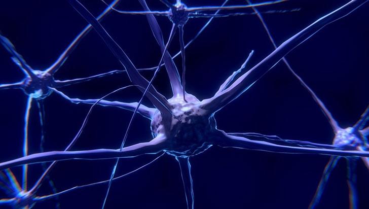 Las neuronas que tenemos en el estómago podrían estar renovándose cada dos semanas
