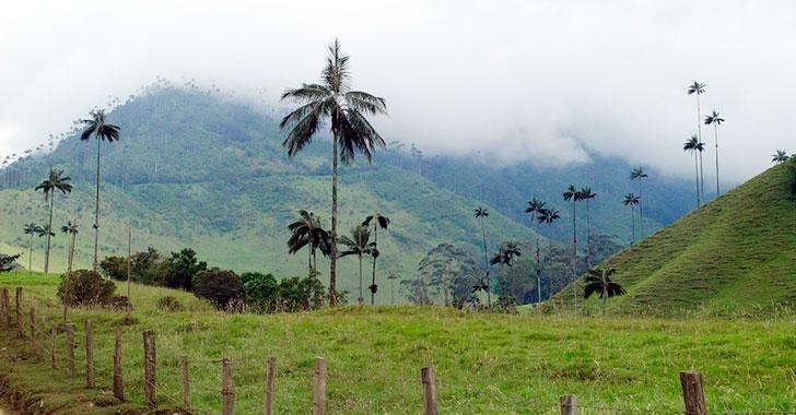En Cocora se despierta  la conciencia ambiental