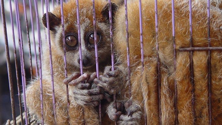 La casa de los animales salvajes no es nuestra casa, la fauna silvestre necesita libertad