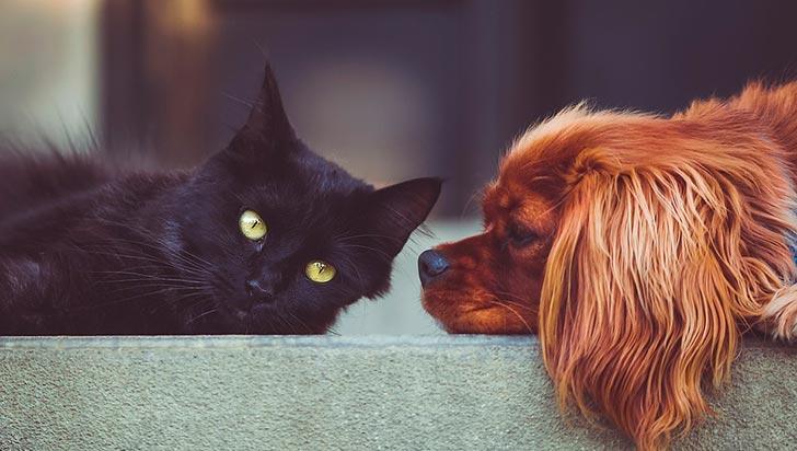 Así se puede ayudar a las mascotas para soportar el sonido de la pólvora