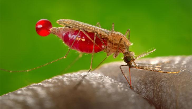 Nuevo método podría identificar portadores de malaria con un test de saliva