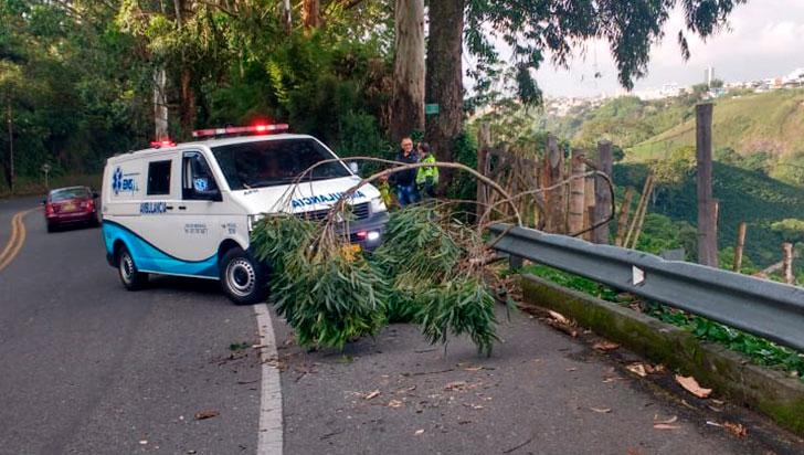 Caída de una rama causó accidente de un ciclista