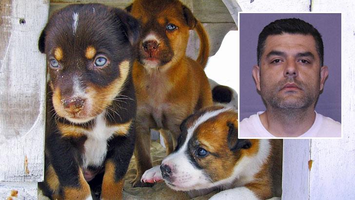 Condenan en EE.UU. a veterinario colombiano que traficaba heroína en cachorros
