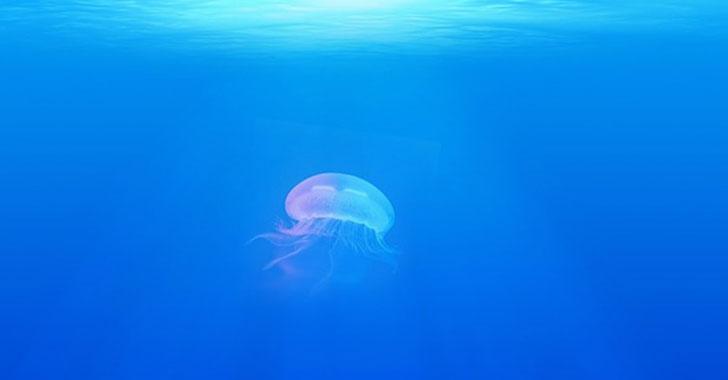 Científicos hallan sustancia en medusas que podría ser utilizada para combatir el cáncer