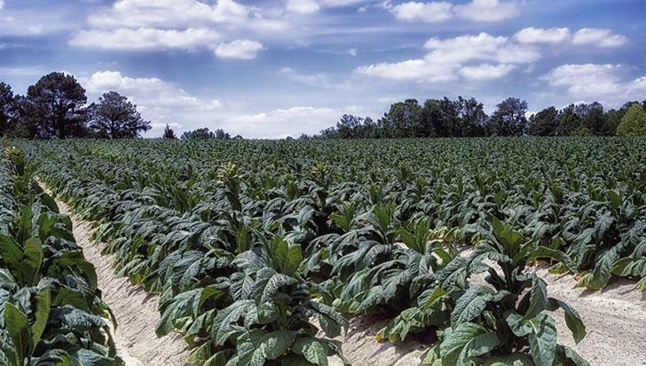 Avance científico permite impulsar un 40% el crecimiento de los cultivos
