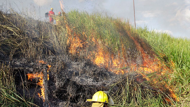 Piromanía, principal causa de incendios forestales; van 57 quemas en el año 2019