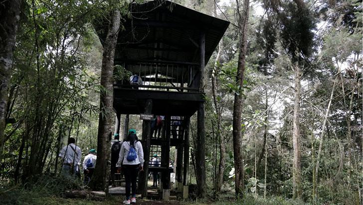 GEB sembró 33.000 árboles; comunidad dice que compensación no es suficiente