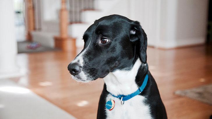 Los perros están sufriendo de infertilidad y los culpables parecen estar en nuestras casas