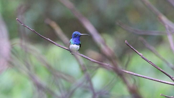 Quindío ha identificado 45 zonas de valor para el avistamiento de aves