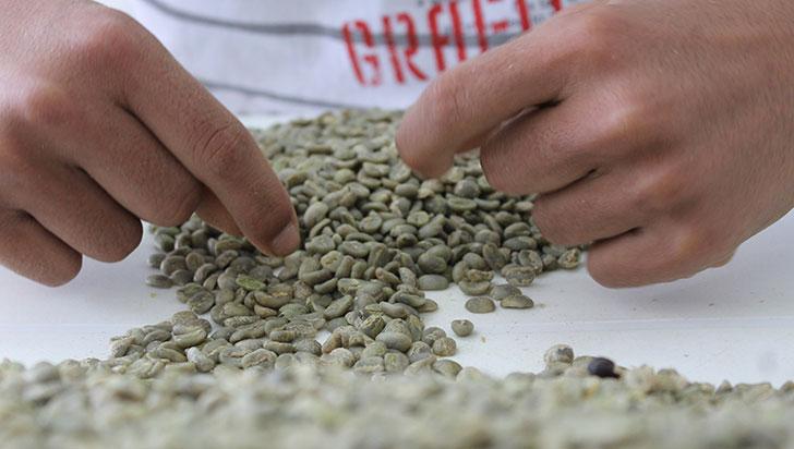 24 de abril, paro cafetero; Gobierno anunció $60.000 millones más para el sector