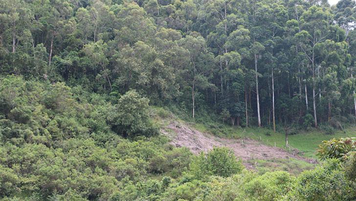 """CRQ: """"En Cocora solo se permiten  actividades agropecuarias sostenibles"""""""
