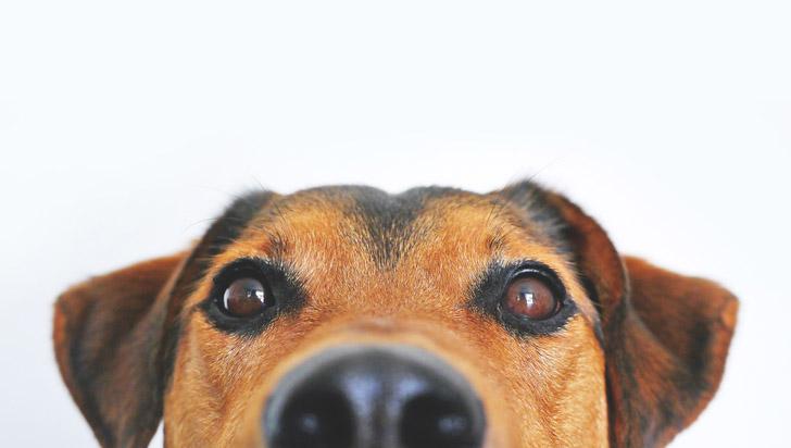 Los perros podrían detectar los ataques de epilepsia en las personas