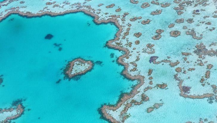 Calentamiento global afectó gravemente crecimiento de la Gran Barrera de Coral