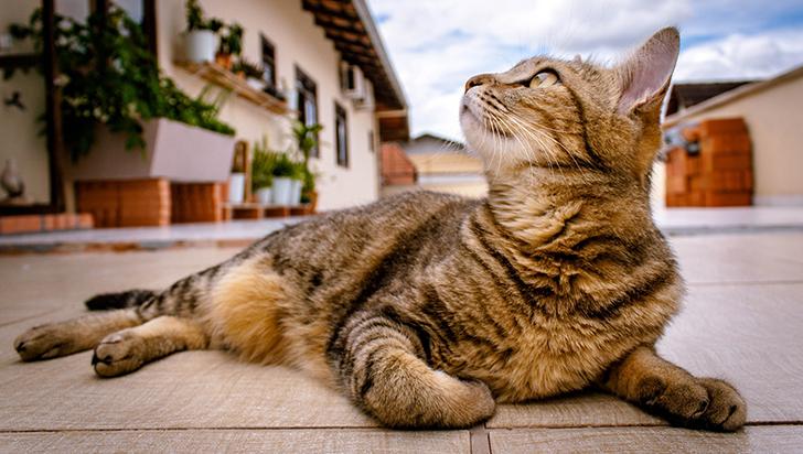 Los gatos sí reconocen su nombre, pero deciden ignorar el llamado, según estudio