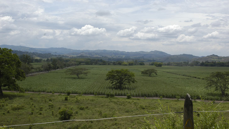 Sobre predios de Pisamal, CRQ busca declaratoria de conservación