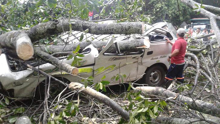Caída de árbol en carretera de Norte de Santander dejó cinco personas muertas