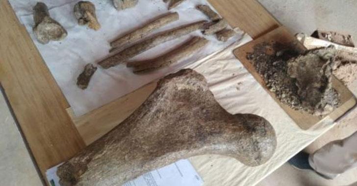 Hallan en Perú fósiles de elefantes prehistóricos en los Andes