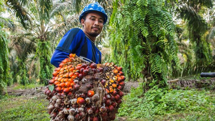 Colombia será sede de debates sobre reducción de la deforestación
