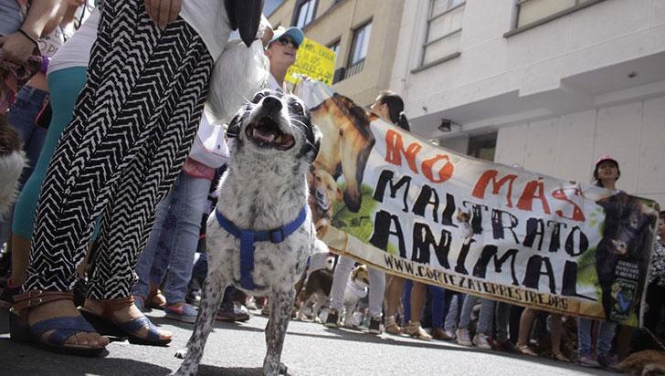 Denuncian envenenamiento de mascotas en el conjunto El Cielo
