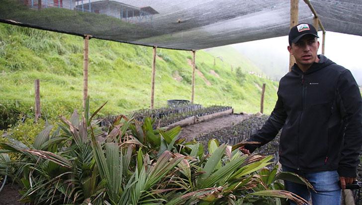 Con siembra de 50.000 palmas de cera se hará reforestación en Cocora