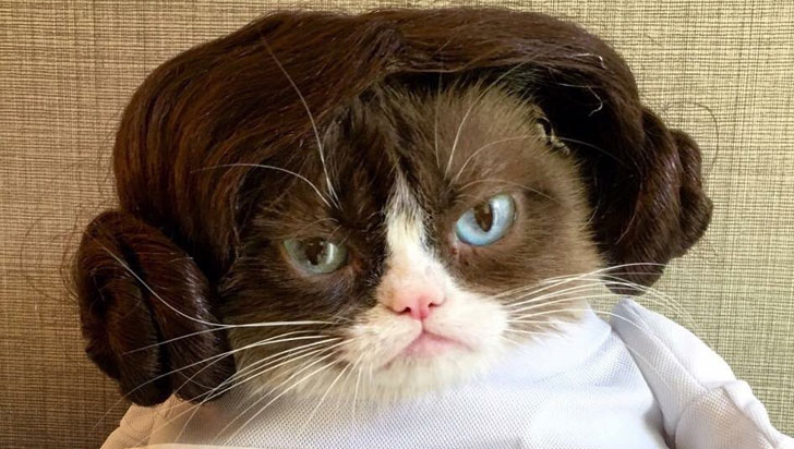 "Murió Grumpy Cat, la ""gata gruñona"", toda una diva de internet"