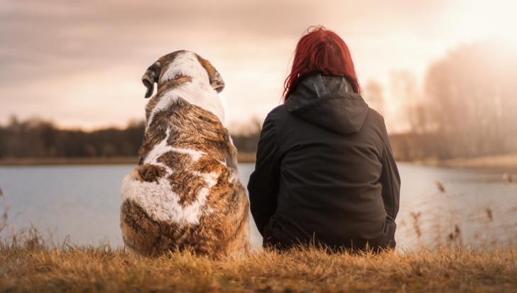 ¿Desea tener un perro en casa? Probablemente sea porque está genéticamente predispuesto a ello