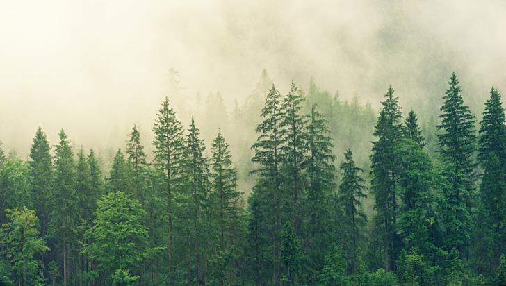 Por primera vez se logra estudiar el crecimiento de los bosques de hoja perenne