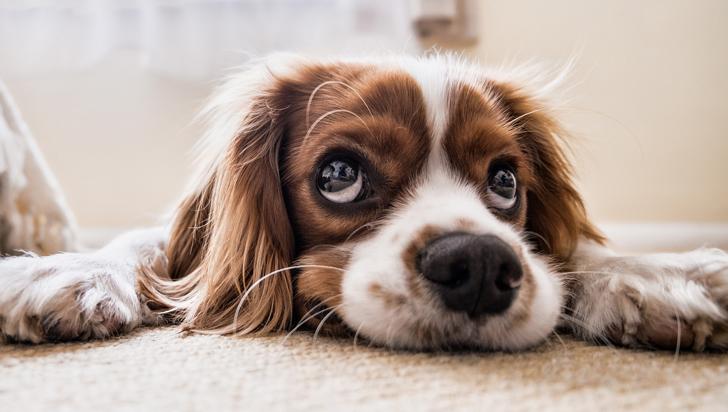 Nuestras mascotas podrían estresarse si nosotros lo hacemos