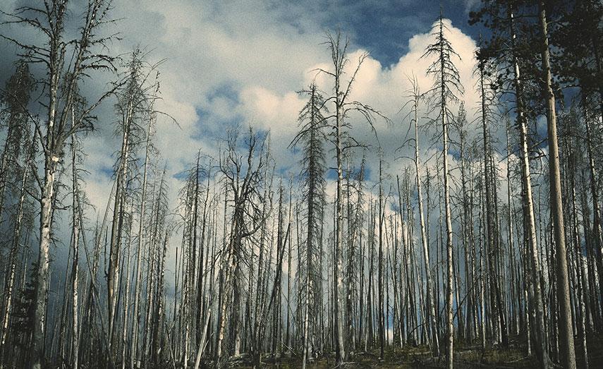 La humanidad acabó con 571 especies de plantas en los últimos 250 años
