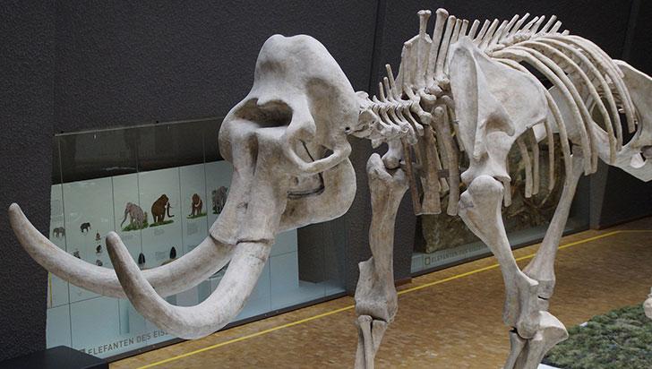 Hallan fósiles animales de entre 10.000 y 14.000 años en el centro de México