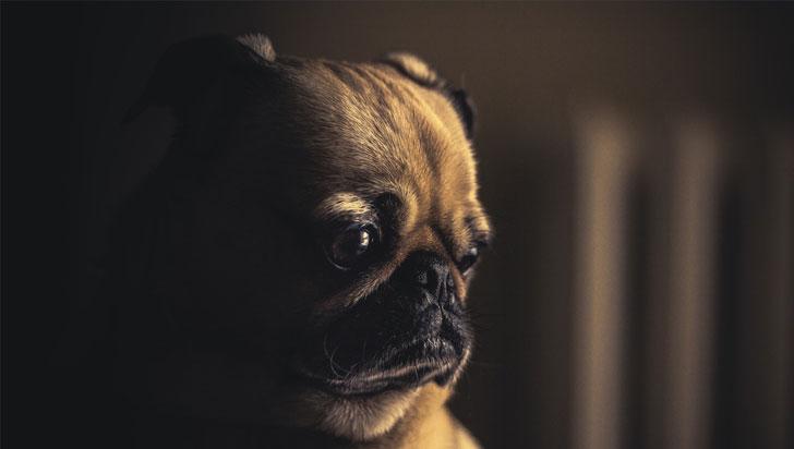 ¿Por qué su perro hace ojitos? Así se comunica mejor con usted