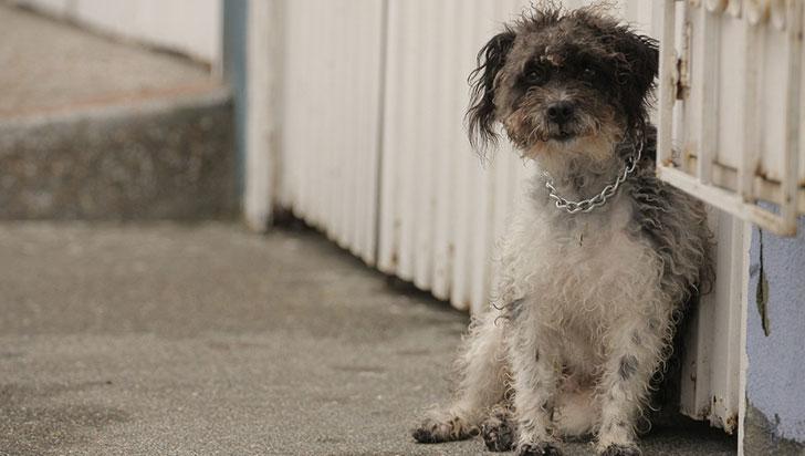 Quindío, en una irregularidad con la falta de manejo a  perros de la calle