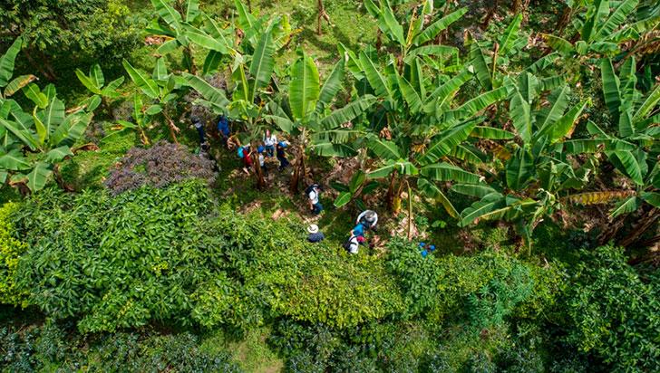 Empresas quindianas realizaron reforestación en 86 hectáreas