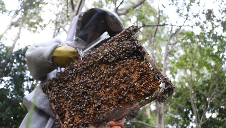 Manejo sanitario de las colmenas, otro factor que lleva a la mortandad de abejas