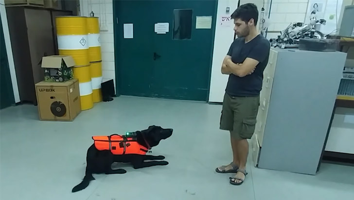 Un chaleco a control remoto ayudaría a comunicarnos con nuestras mascotas